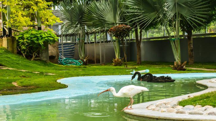 Taman minimalis yang dilengkapi dengan kolam akan menambah kesegaran di halaman. (Foto: Unsplash)