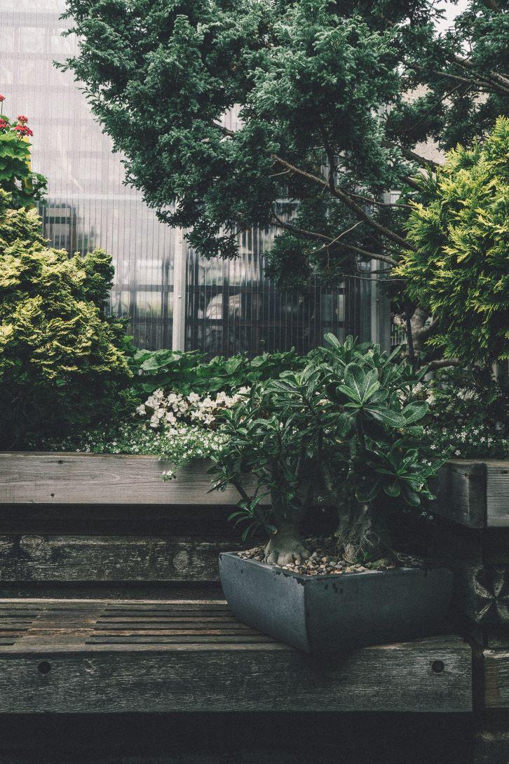 Caption: Bonsai menjadi salah satu pilihan tanaman untuk menghiasi taman minimalis. (Foto: Pexels)