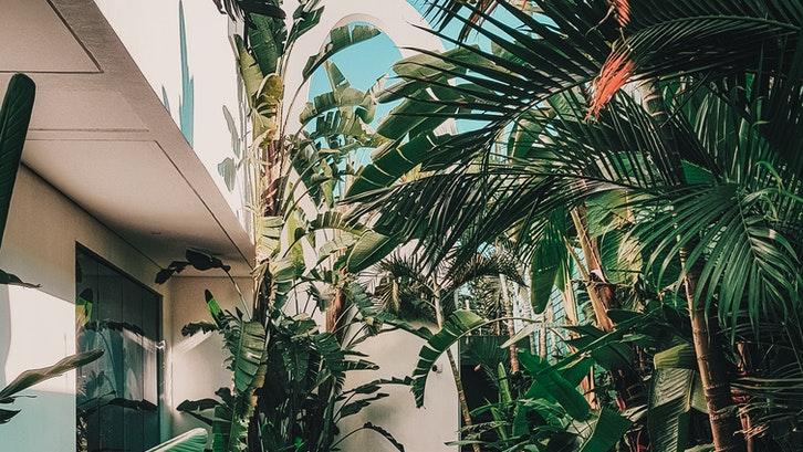 Manfaatkan bagian samping rumah yang sering terabaikan menjadi taman minimalis. (Foto: Pexels)