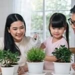9 ต้นไม้ฟอกอากาศ มีหลายพันธุ์ที่ปลูกง่ายในบ้าน