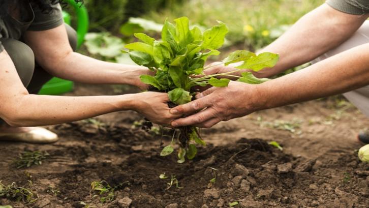 Bisa dikembangkan menjadi bisnis lain seperti perkebunan, juga merupakan kelebihan dari investasi tanah (Foto: Freepik.com)