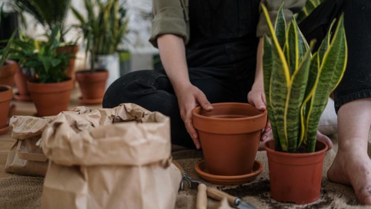 1. Berkebun Tanaman Sayuran sebagai Gaya Hidup Sehat