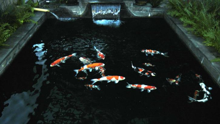 Desain kolam ikan koi dapat disesuaikan dengan luas lahan rumah dan preferensi pemilik rumah. (Sumber: Pexels.com)