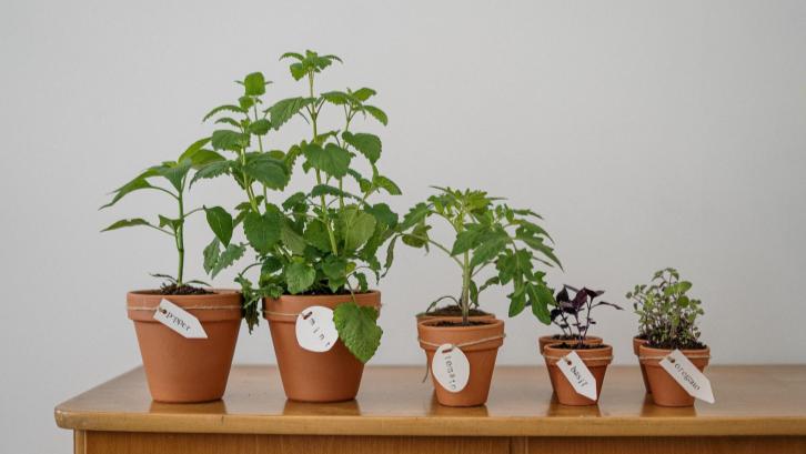 Tanaman bayam adalah salah satu jenis tanaman yang mudah ditanam di rumah. (Sumber: Pexels.com)