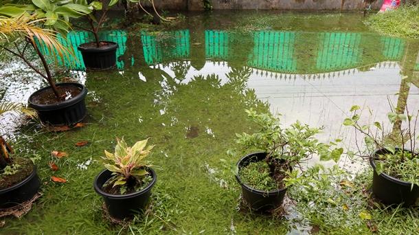 นอกจากวิธีไล่ตะขาบแล้ว การดูแลไม่ให้บ้านมีน้ำท่วมขังก็ช่วยได้