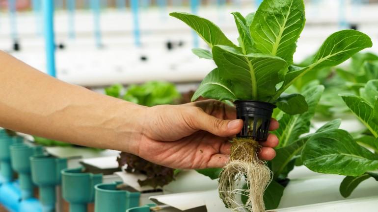 Sayuran Hidroponik Jenis Dan Cara Menanam Yang Mudah Rumah Com