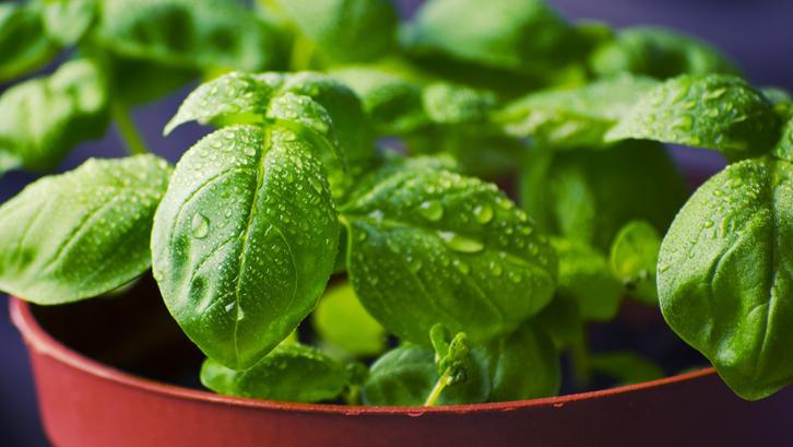 Tanaman Sayuran-Foto Utama