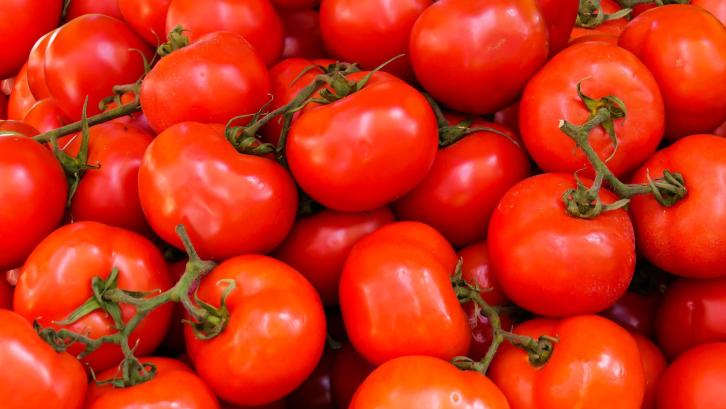 Tanaman tomat cocok ditanam di rumah. (Sumber: Pexels.com)