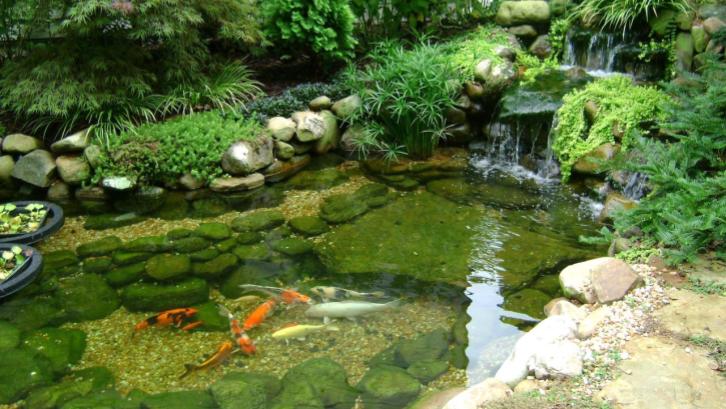 Penempatan air terjun pada kolam ikan koi memberikan kesan tema Jepang. (Sumber: Pexels.com)