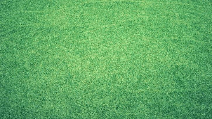 Rumput Jepang menjadi salah satu rumput taman paling populer. (Sumber. Pexels)