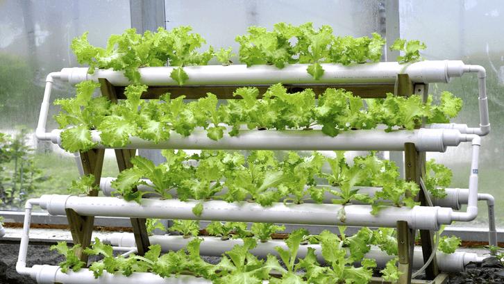 Tanaman hidroponik bebas bahan kimia penyubur tanaman. (Sumber: Pinterest)