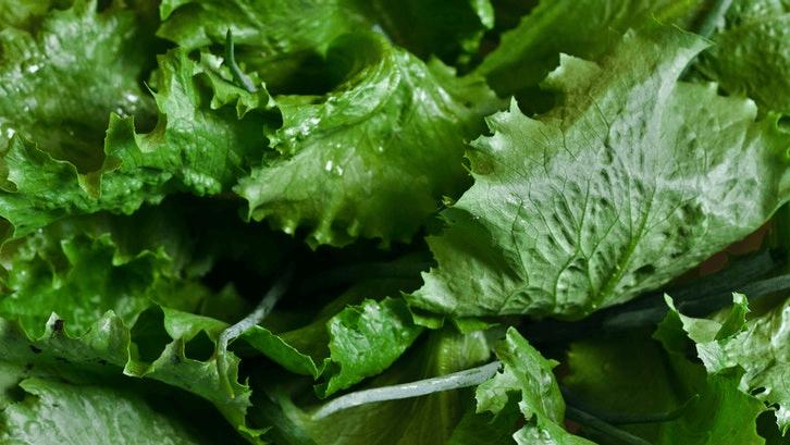 Sayuran selada hidroponik mudah perawatannya. (Sumber: Pexels)
