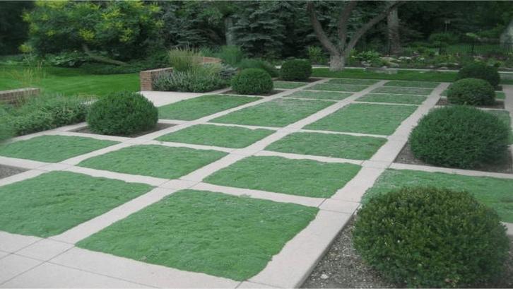 Halaman dengan rumput petak. (Sumber: Decoist.com)