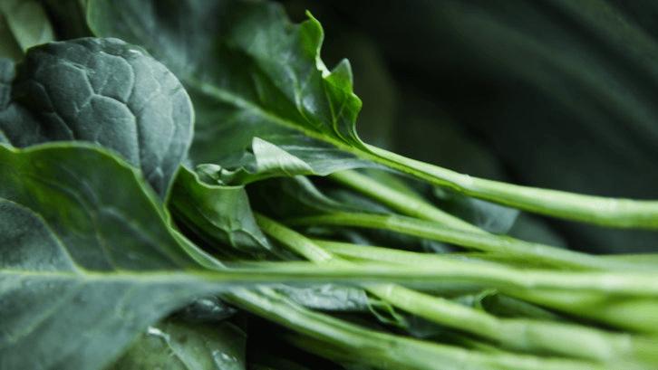 Sawi termasuk tanaman yang mudah ditanam. (Sumber: Pexels)