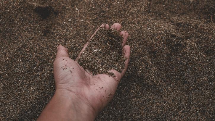 Tanah subur berpasir ideal bagi rumput jepang. (Sumber. Pexels)