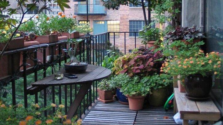 Tentukan lokasi pada saat Anda meletakkan tanaman, pastikan tetap terkena matahari. (Foto: Homebnc.com)