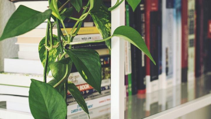 Tanaman merambat dapat juga ditanam dalam ruangan. (Foto: Pexels)