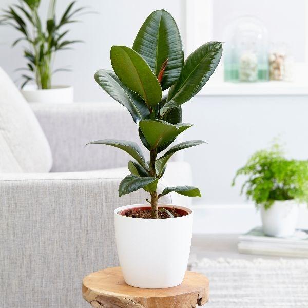 Tumbuhan_Dalaman_4