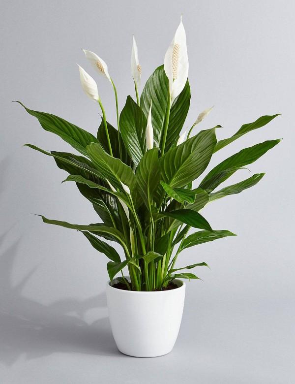 Tumbuhan_Dalaman_6
