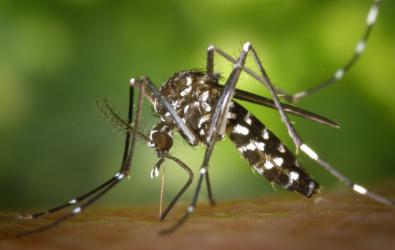 10 Cara Ampuh untuk Membasmi Jentik Nyamuk