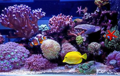 1. Cara Mudah Bikin Aquarium Air Laut di Rumah
