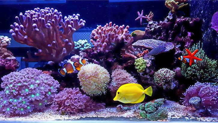 Ada banyak sekali ragam ikan air laut yang bisa Anda miliki. (Foto: Pet Assure)