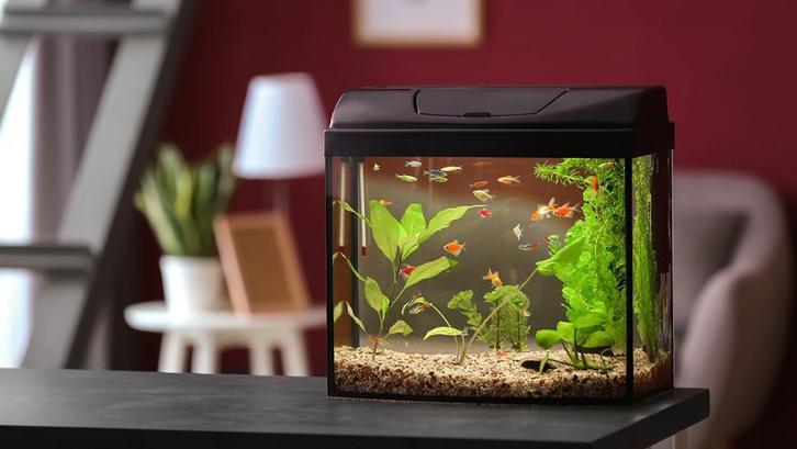 Meskipun serupa, aquarium laut dan air tawar mempunyai banyak perbedaan. (Foto: Chicago Tribune)
