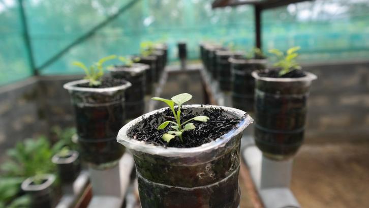 Tanaman hidroponik tidak membutuhkan tanah yang luas agar tanaman bisa tumbuh dengan baik. (Foto: Pixabay - Cecep Risnandar)