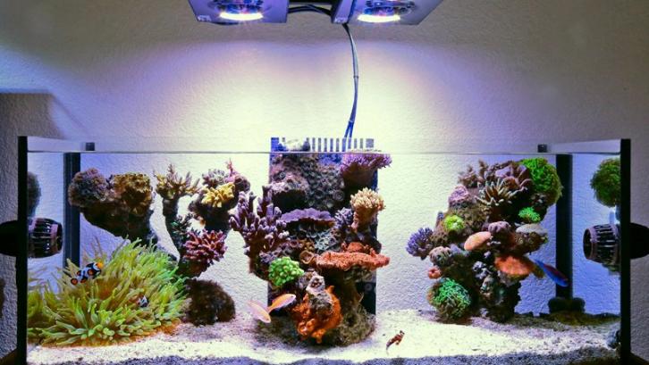 Pencahayaan pada aquarium sangat penting agar ikan memiliki siklus yang sesuai. (Foto: Marine Depot Blog)