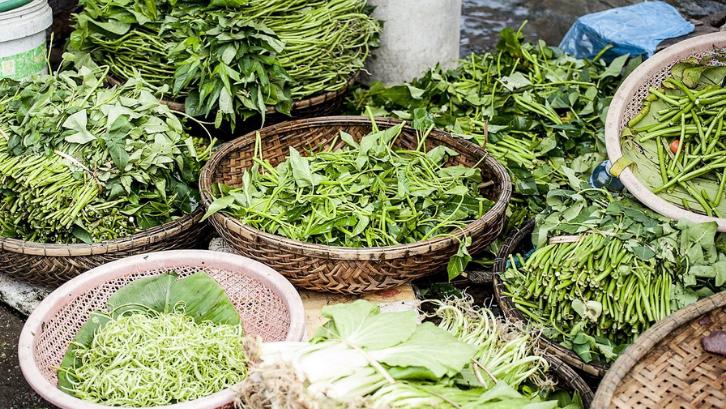 Tanaman kangkung merupakan pelengkap dari berbagai tanaman hijau lainnya. (Foto: Pixabay - Pexels)