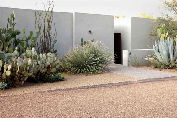 Walaupun berduri dan hijau padang pasir, jika susun aturnya betul, laman kaktus masih nampak menarik.