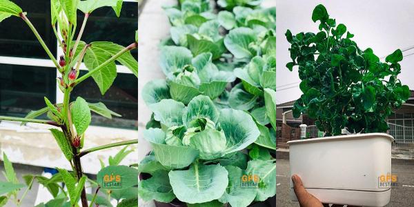 Hasil tanaman bukan sahaja boleh digunakan sendiri tetapi juga dijual!