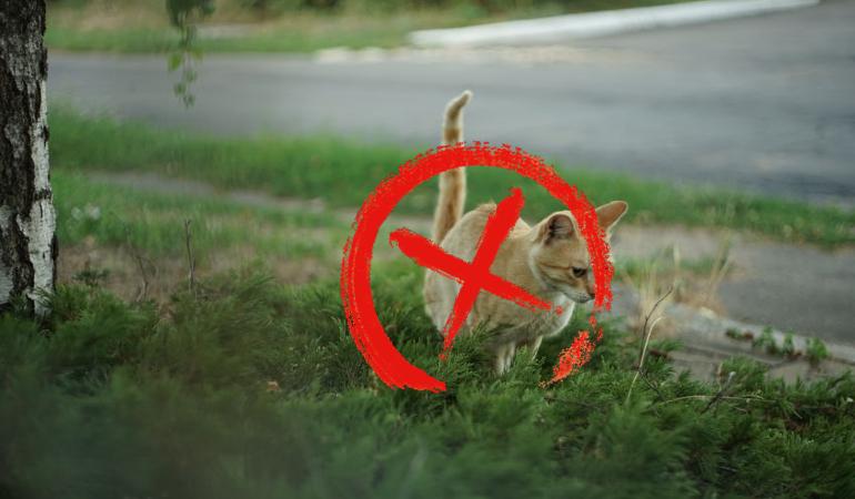 kucing, cara halau kucing, ubat halau kucing, petua halau kucing, kucing berak, cara halau kucing berak, petua elak kucing berak di halaman rumah, petua kucing berak merata, elak kucing berak di tempat yang sama, cara menghalau kucing, petua elak kucing berak, halau kucing