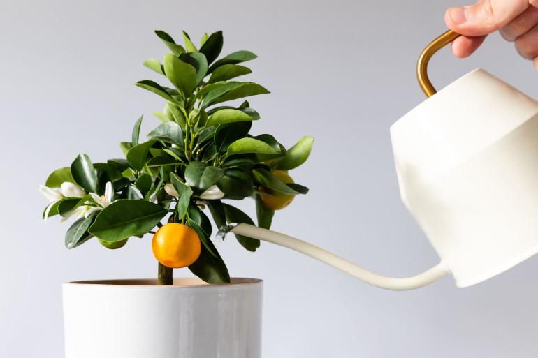 7 ต้นไม้มีกลิ่นหอม ควรปลูกในบ้าน
