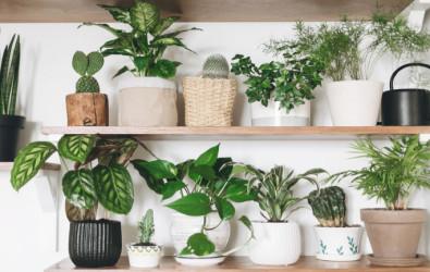 CH_12 Indoor Plants - Main