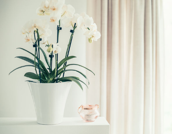 CH_Orchid (1)