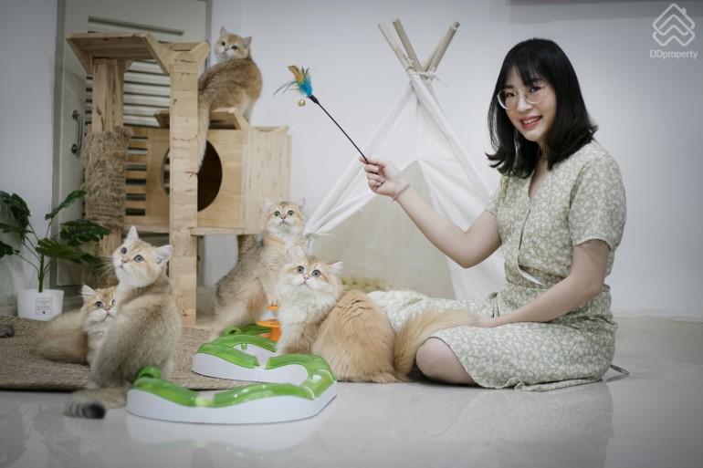 เลือกบ้านอย่างไร ให้เหมาะกับทาสแมว