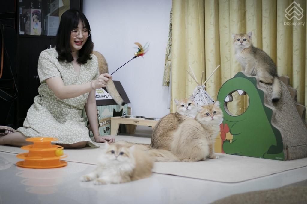 โรคแมวงอก ทำให้ตอนนี้มีแมวในบ้านถึง 12 ตัวแล้ว