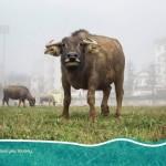 unsplash-property bull run