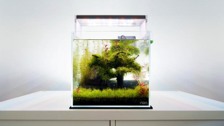 Indah dan menarik, aquascape memiliki daya tariknya sendiri. (Foto: Medium)