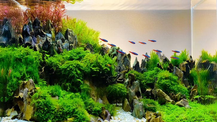 Ada banyak sekali variasi ikan hias yang cocok dan bisa dimasukkan ke dalam kategori ikan aquascape. (Foto: Fish Hobbyist)