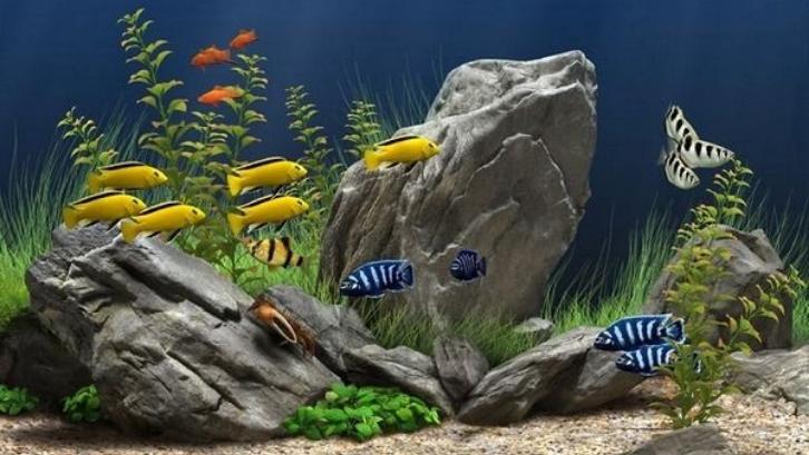 Ikan aquascape memiliki warna dan bentuk yang sangat menarik. (Foto: Aquascape Ideas)