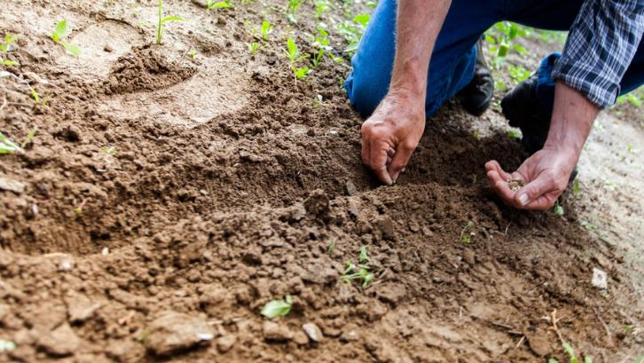 Tanah dengan tekstur yang kering akan lebih sulit untuk ditumbuhi tanaman. (Foto: Pexels - Binyamin Mellish)