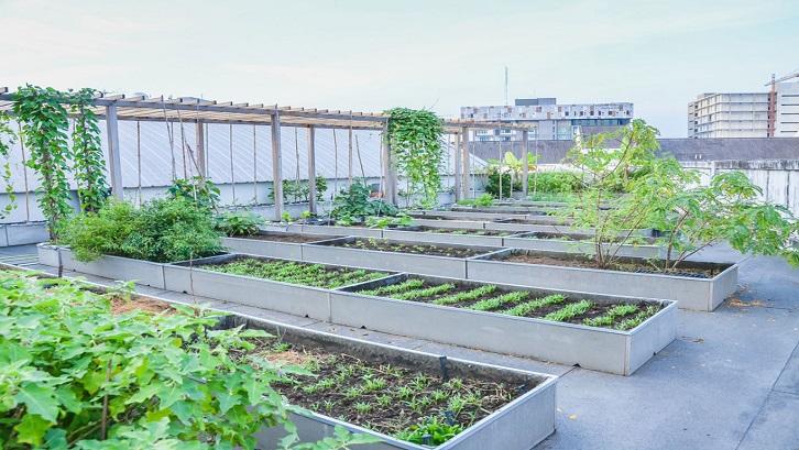 Budidaya tanaman sayuran tidak hanya bisa mengisi waktu luang, namun juga menjadi peluang bisnis menjanjikan. Sumber: Gardening Know How