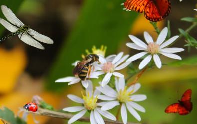 wildlife, balcony garden, home garden, butterfly, bee, ladybug, dragonfly, flowering plants, garden plants, honey bee