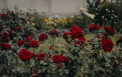 10 Inspirasi Taman Bunga di Rumah Idaman dan Cara Membuatnya