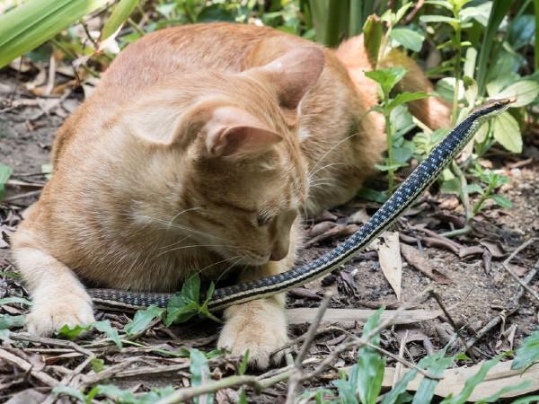ular masuk rumah, patukan ular, gigitan ular, cara cegah ular masuk rumah, ular, ular sawa, ular tedung, ular kapak, ular senduk, rumah
