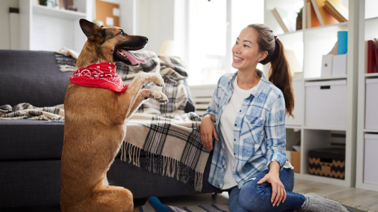DOG-friendly-singapore-OWNERS-WHERE-TO-LIVE