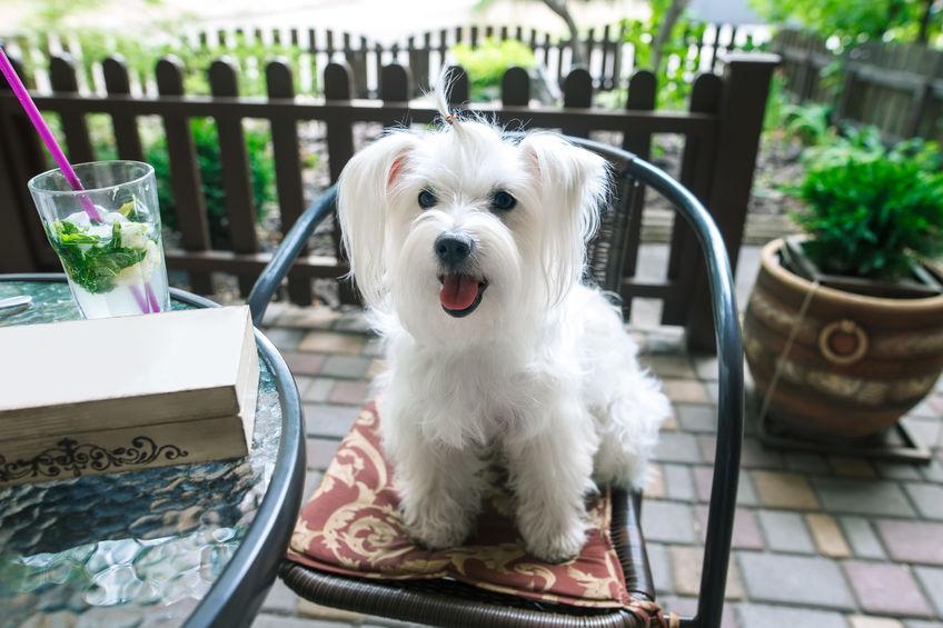 dog-friendly cafe singapore