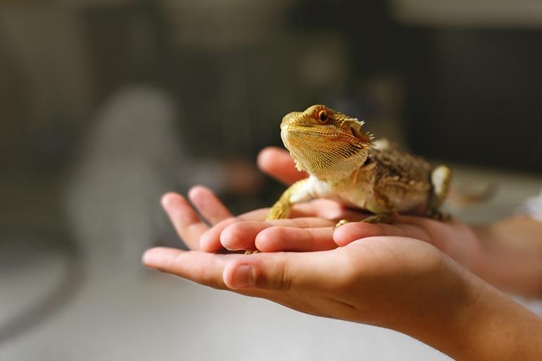 Exotic Pets คือสัตว์เลี้ยงจริงหรือ คิดให้ดีก่อนมีสัตว์แปลกในครอบครอง